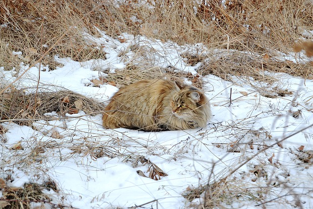 Ruhende Katze im Winter-Schnee - Glarean Magazin